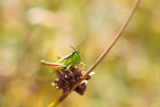 The name is Grass the Hopper by Hazel-Photography
