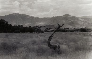 Branch in Lake Isabella, CA by VML