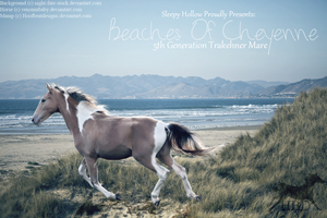 Champagne Paint On Beach Premade by HoofBeatDesigns