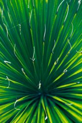 Green Sotol by Mark-Fisher-Photos