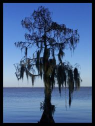 Spanish Moss by Touch-and-Go