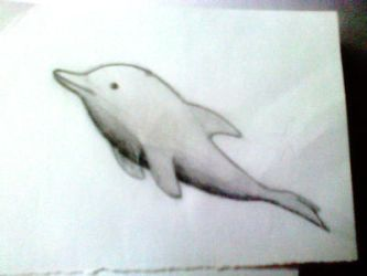 Dolphin Drawing by StellaStellitsa
