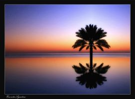 Palm Tree by EmiratesSignature