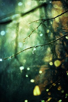 First Light Dew by breapea