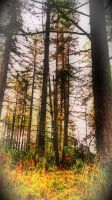 Into the Woods by RCAmbriz