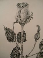 pointillism with pen and ink by art-devi