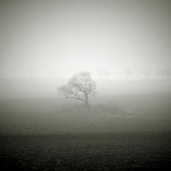 CCCXVII. ..in the fog XX. by behherit