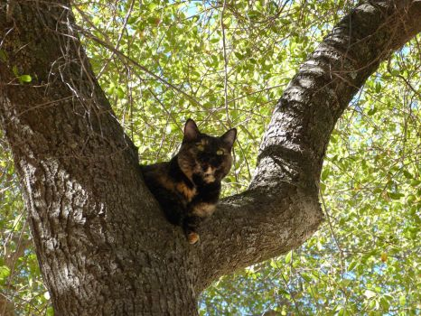 Cat in Tree by Royce-Barber