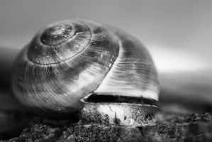Snail Shell by Ikarusthefirst