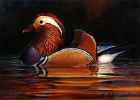 Mandarin Duck I by Nambroth