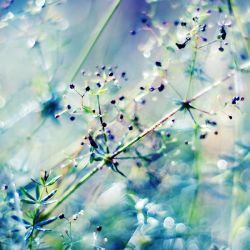 in the grass by Megson