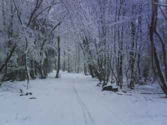 08-04-06 - The White Path 2 by Only-truth