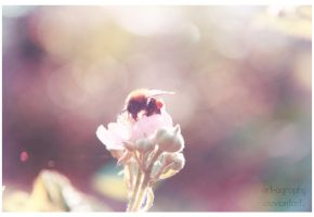 Pollination by Art-ography