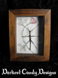 Framed Walking Stick - Mounted Insect by DarkestCandyDesigns