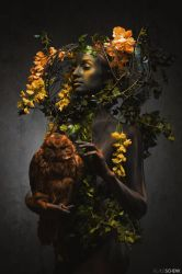 The Owl by kschenk