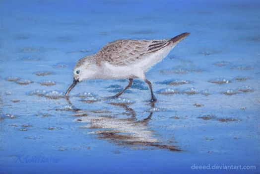 Sandpiper in Pastels 1 by deeed