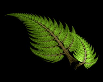 Fern Fronds by Gibson125