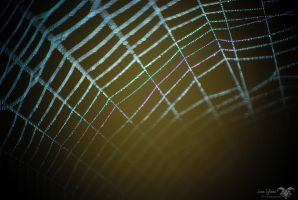 Spiderweb with Drops by JuanIglesias90