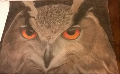 Owl with Colored Pencils by newloveart31
