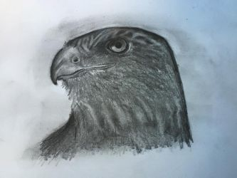 Hawk Penciled by Kkobra