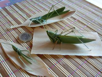 grasshoppers with palmleaves by orsobrusco