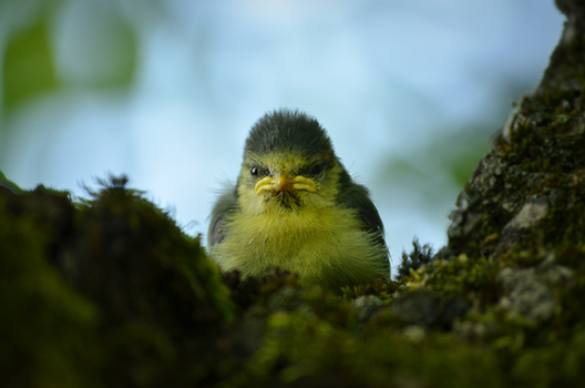 angry bird by delizi
