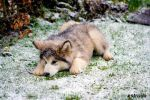 Playing in the Snow by Estruda