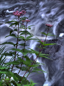 Fall of the Wild Flower 2 by wb-skinner