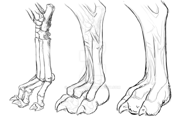 Wolf Paw study by CasArtss