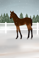 Nova's first outing by Happy-Horse-Stable