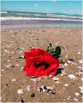 Rose from the sea by 91Elena91