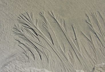Sand Trees by tundra-timmy