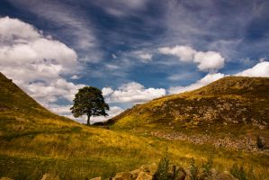 Sycamore Gap 4 by newcastlemale