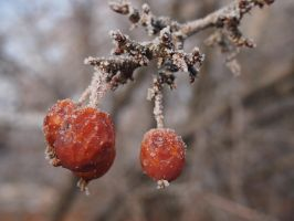 Frosty berries macro 1 by Meagharan