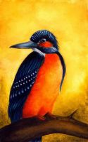 Kingfisher by EvelineaErato