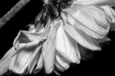 Black and White Flower by Larah88