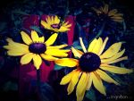 Summer Flower 2012 - 11 by Ingnition