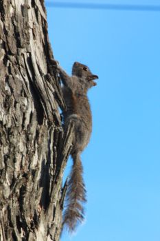 NATURE Dahlonega Squirell by jimmylee1562