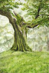 Venerable Tree by cirruscastle