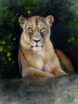 Lioness by MeduZZa13