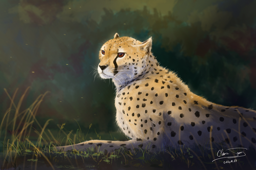 Cheetah by ClaireJouy