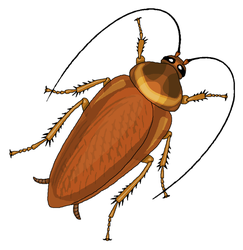 Cockroach Clipart by MisterBug