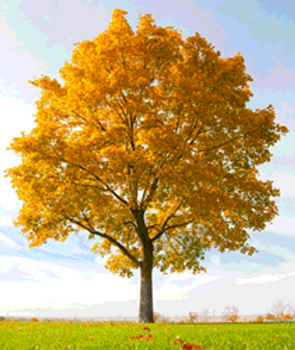 Tree Seasons - Animated Gif by lilipilyspirit by LilipilySpirit