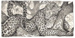 The Leopard Tree by balaa