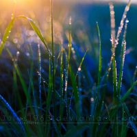Morning glory by Jules1983