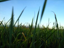 Grass by Tigerente-in-love