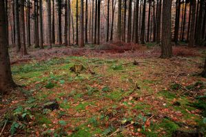 Forest Stock 3 by Sed-rah-Stock