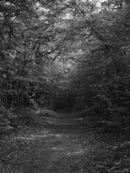 The path not yet taken by flashback37