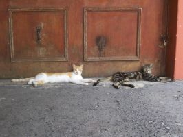 Cats 4 by WrittenPhotographs
