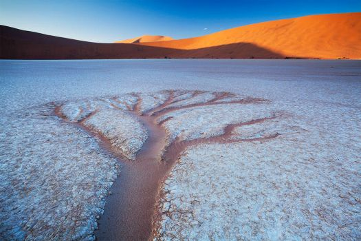 The Trees of Deadvlei by hougaard